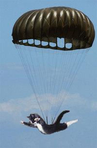 Image result for who came up with parachuting cats